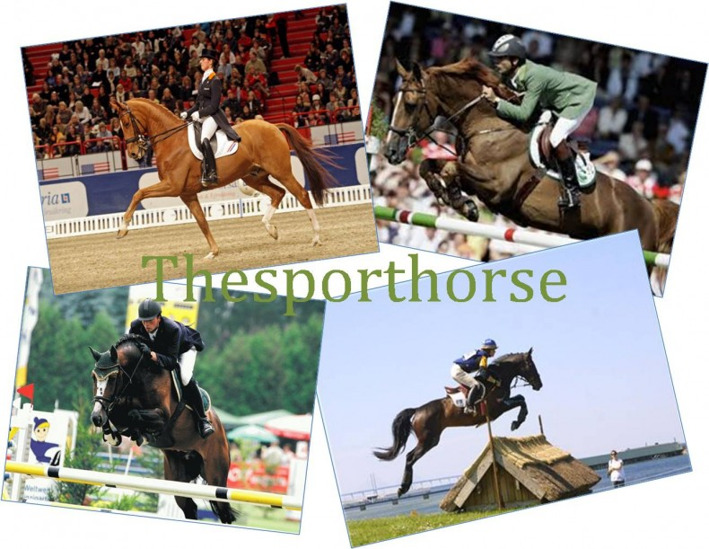 The sporthorse